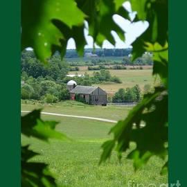 Patricia Overmoyer - Vista Through Oak Leaves-I