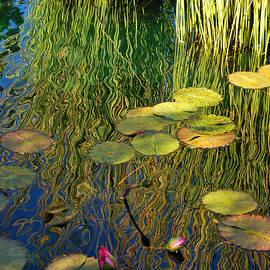 Nancy Mueller - Water Lilies Reflection