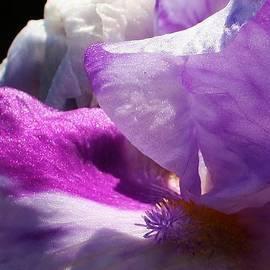 Bruce Bley - Waves of Violet