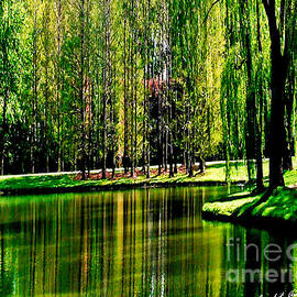 Carol F Austin - Weeping Willow Tree Reflective Moments