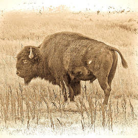 Steve McKinzie - Western Buffalo