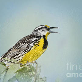 Betty LaRue - Western Meadowlark