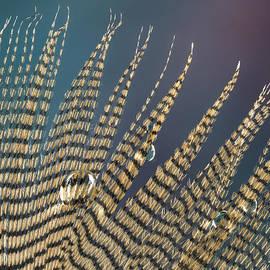 Jean Noren - Wet Drop on Wood Duck Feather