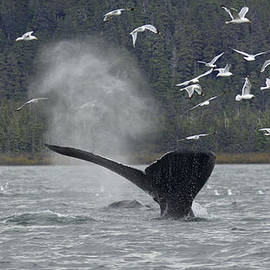 Nathan Mccreery - Whale 1277 Chilkat Channel