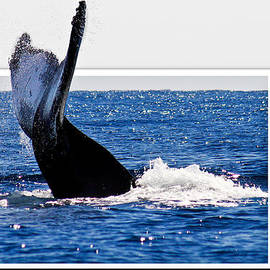 Jean Noren - Whale Tail