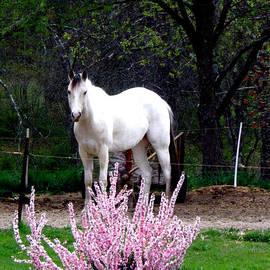 Kim Galluzzo Wozniak - White Beauty beyond pink