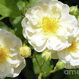 Kathleen Struckle - White Flowers