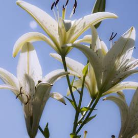 Michael Friedman - White Lilies II