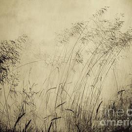 Arne Hansen - Windblown