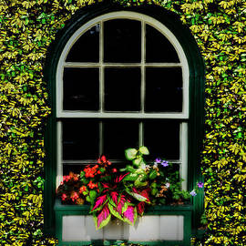 Bill Cannon - Window on an Ivy Covered Wall