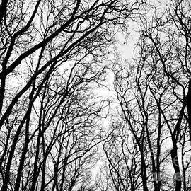 Nabucodonosor Perez - Winter Branches - I