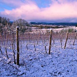 Jean Noren - Winter in the Vineyard