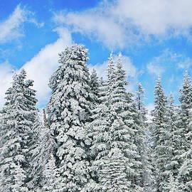 Jeff Kolker - Winterscape
