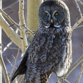 Doug Lloyd - Wise Old Owl