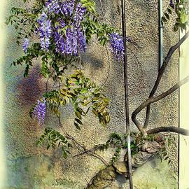 Joan  Minchak - Wisteria Wall