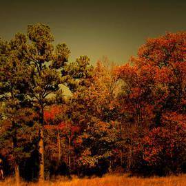 Nina Fosdick - Woodland in Autumn