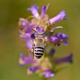 Mitch Shindelbower - Worker Bee
