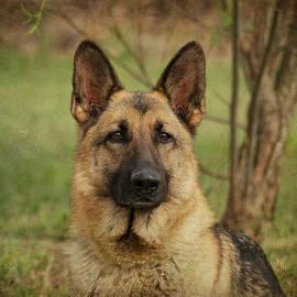 Sandy Keeton - Yahtzee - German Shepherd