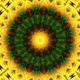 Yvette Pichette - Yellow Daisies