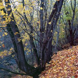 Romeo Koitmae - Yellow Forest Floor