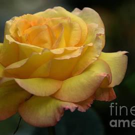 Bob Christopher - Yellow Rose