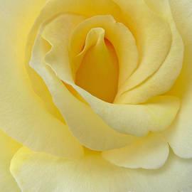 Jennie Marie Schell - Yellow Rose Chiffon