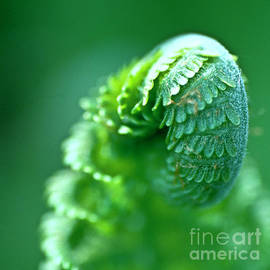 Heiko Koehrer-Wagner - Young Fern close up