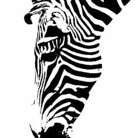 Gary Prill - Zebra