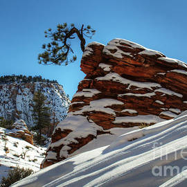 Bob Christopher - Zion National Park In Winter
