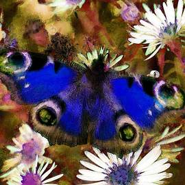 Sergey Lukashin -  Blue butterfly