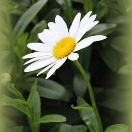 Photographic Art and Design by Dora Sofia Caputo -  Daisy Lovely in White