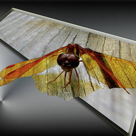 Donna Brown -  Eastern Amber Dragonfly 3D