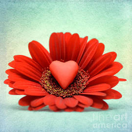 . gerbera with heart . - SK Pfphotography