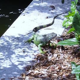 Trudy Brodkin Storace -    Iguana Strolling Waterway