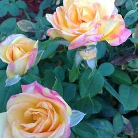 Kori Allen -  Neon roses