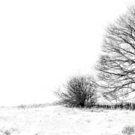 Linsey Williams -  Winters Grip At Bradgate Park