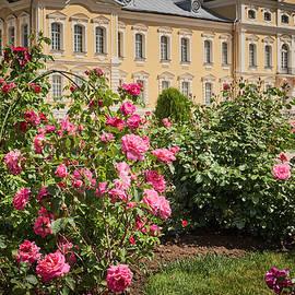 Valdis Veinbergs - A beautiful rose bush castle park 1