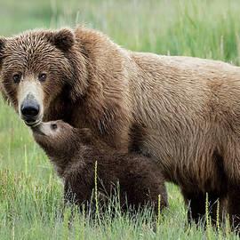 Linda D Lester - A Little Bear Loving