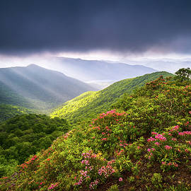 Dave Allen -  Asheville NC Blue Ridge Parkway Spring Flowers North Carolina