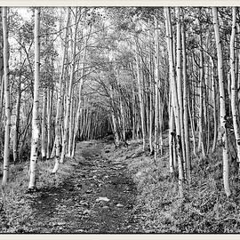 Farol Tomson - Aspen Forest