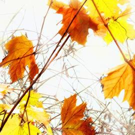 Ian  MacDonald - Autumn Colors