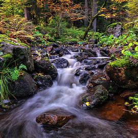 Steffen Gierok - Autumn Colors
