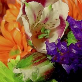 Elizabeth Tillar - Autumn Contrasts