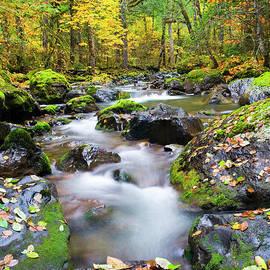 Mike Dawson - Autumn Flow