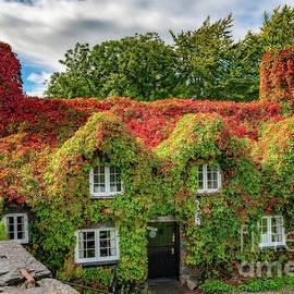 Adrian Evans - Autumn Tea House