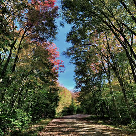 David Patterson - Autumn Walk