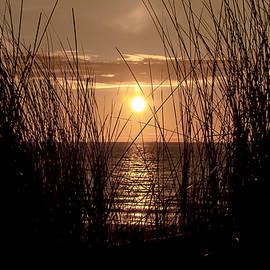 Alex Hiemstra - Backlight Beach