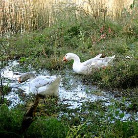 Hans Peter Goepel - Bassendean Swampland