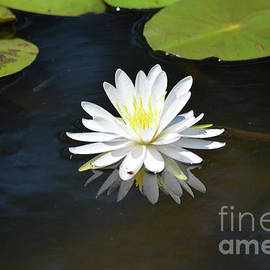 Ruth Housley - Beautiful Water Lily