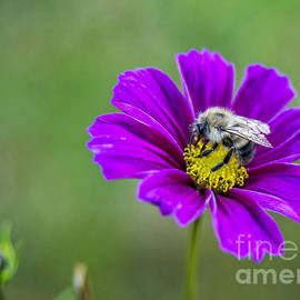 Alana Ranney - Bee